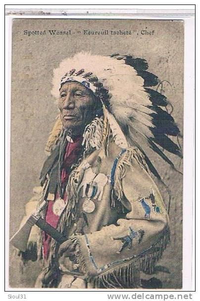 http://www.american-tribes.com/messageboards/dietmar/spottedweasel.jpg