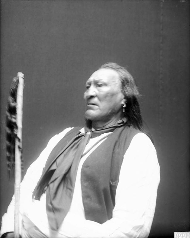 http://www.american-tribes.com/messageboards/dietmar/yellowbull5.jpg