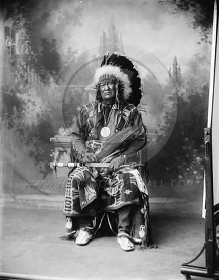 http://www.american-tribes.com/messageboards/dietmar/yellowbull7.jpg